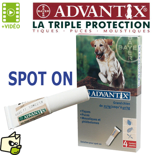 anti puce chien