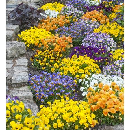 fleurs communes
