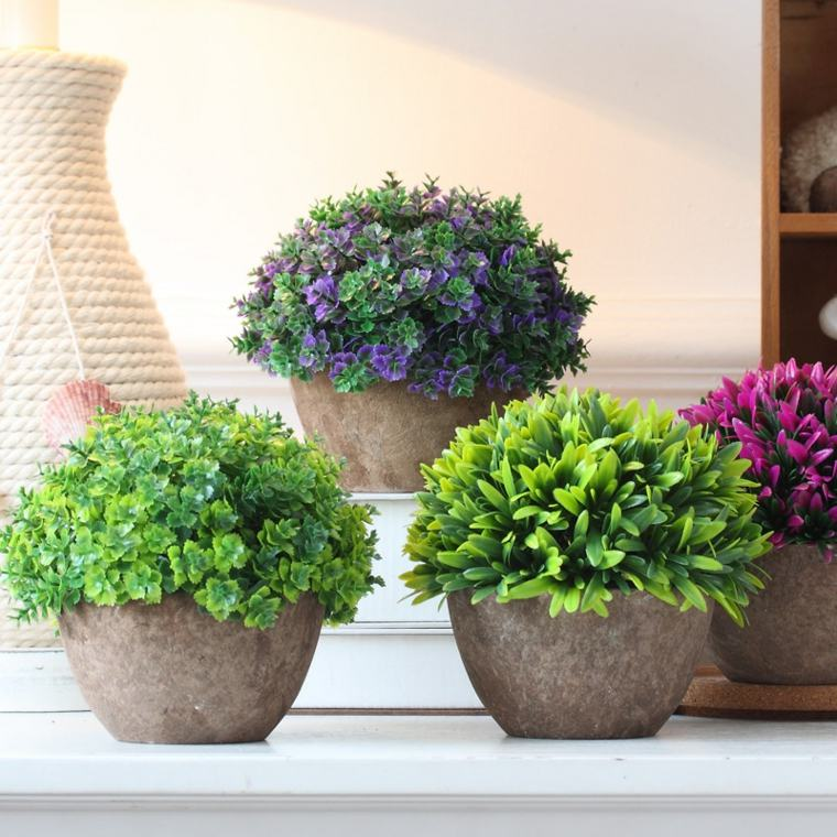 plante exterieur en pot