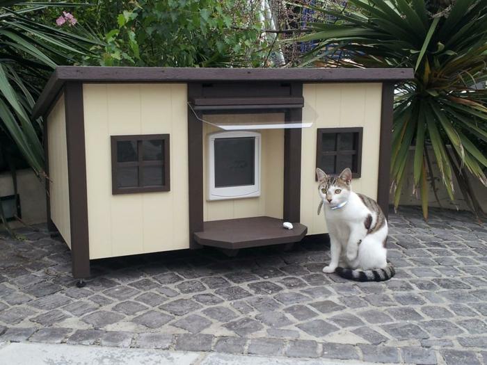 abri exterieur chat