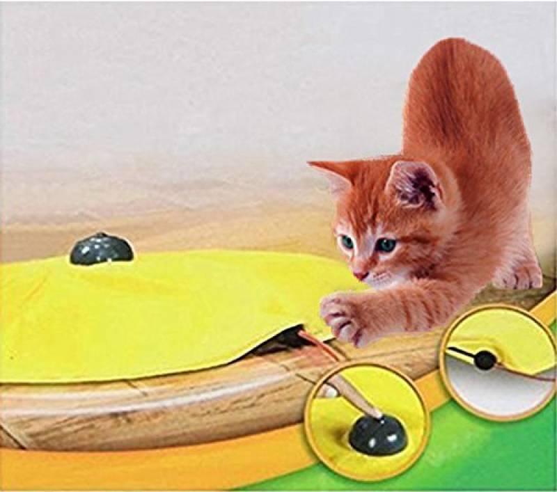 affaire pour chat