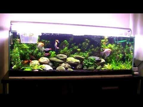 aquarium 200 litres