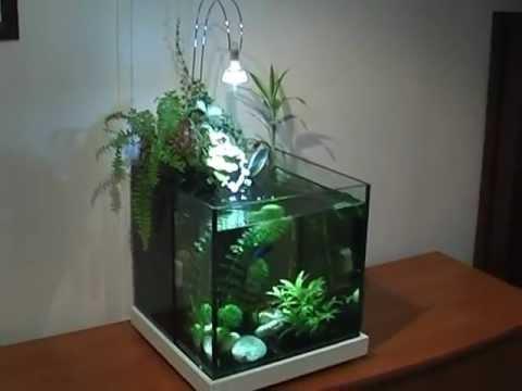 aquarium carré