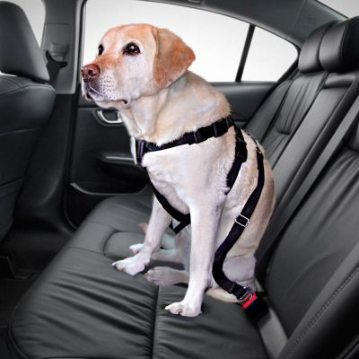 ceinture chien