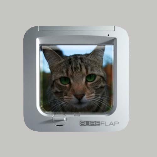 chattiere