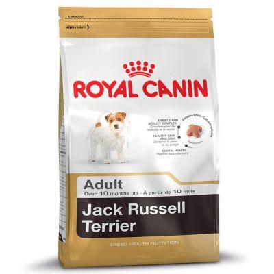 croquette jack russel