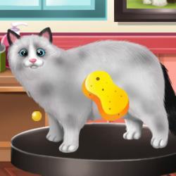 des jeux de chat