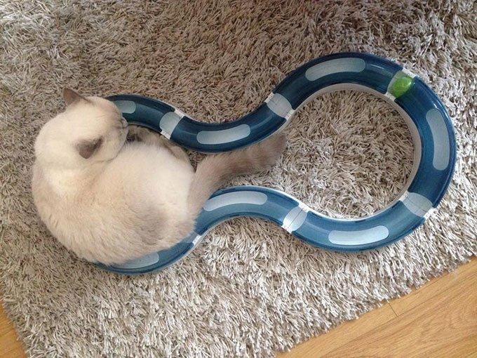 jeux des chats