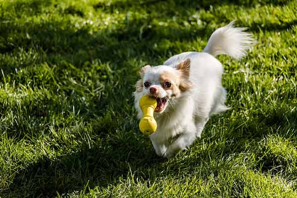 jouet pour chien qui couine