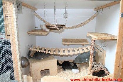 jouet pour chinchilla