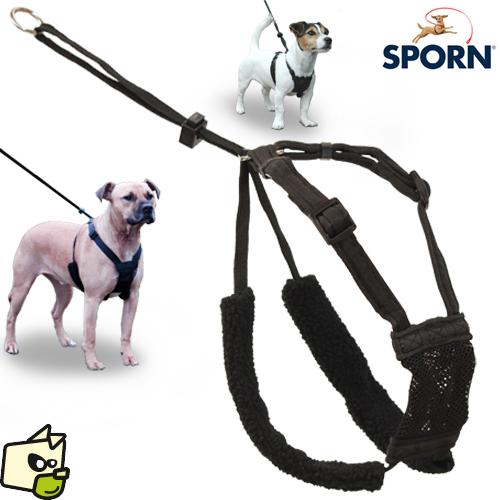 laisse et harnais pour chien