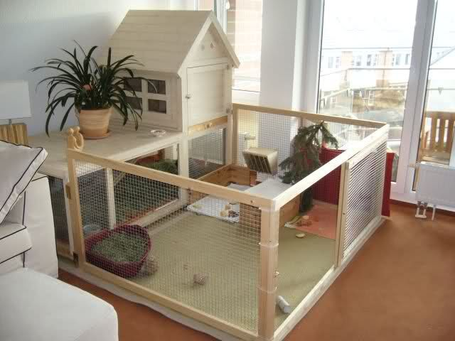 maison pour lapin interieur