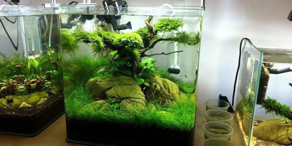nano aquarium