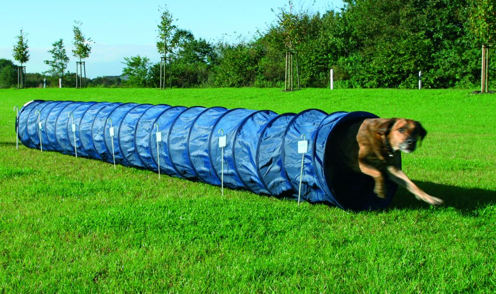 tunnel pour chien